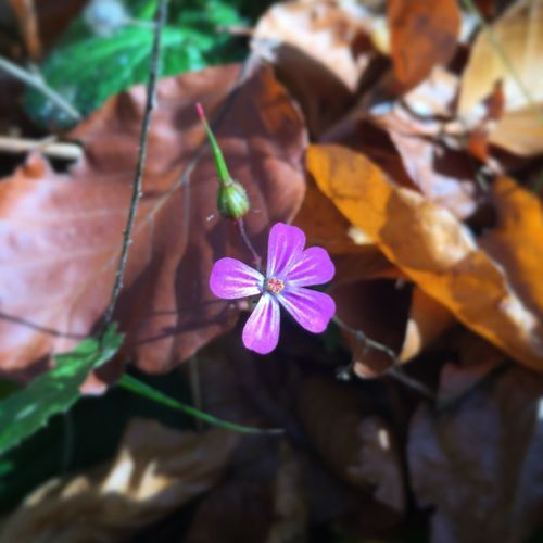 So are you really early or really late? Flower Blooming In Winter WTF Beauty In Nature Growth Fragility Outdoors No People Close-up Day Petal Nature