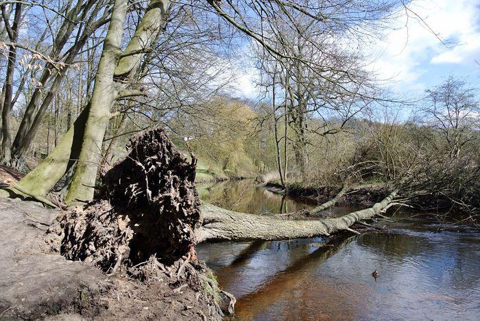 Fallen Tree Natural Bridge