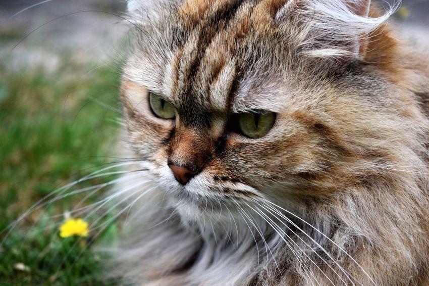 One Animal Cat Pets Whisker Feline Animal Head  Animal Themes Domestic Animals Animal Hair Animal Nose No People