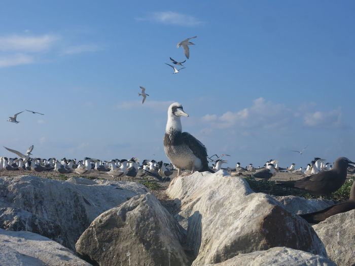 Seagulls flying over rocks by sea against sky
