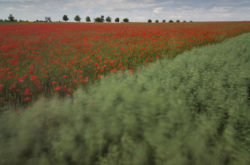 Movements Movement Photography Fields In Revolt Enjoying Life EyeEm Nature Lover Nature_collection The Great Outdoors - 2016 EyeEm Awards Poppy Season Poppy Flowers Poppy Fields Kronsberg Hanover Walking Around Naturelovers The Magic Mission From My Point Of View Eyeem Market EyeEm Flower Nature Is Art EyeEm Gallery Nature Photography Wind Movement Poppy In Motion Colour Of Life Pivotal Ideas capturing motion Beautifully Organized The Great Outdoors - 2017 EyeEm Awards Sommergefühle EyeEm Selects Neon Life Breathing Space Investing In Quality Of Life The Week On EyeEm EyeEmNewHere Your Ticket To Europe Mix Yourself A Good Time Been There. Been There. Discover Berlin Done That. Lost In The Landscape Second Acts Be. Ready. EyeEm Ready   AI Now An Eye For Travel Colour Your Horizn Stories From The City Go Higher Visual Creativity Summer Exploratorium Focus On The Story #FREIHEITBERLIN This Is Natural Beauty Holiday Moments Capture Tomorrow Moments Of Happiness