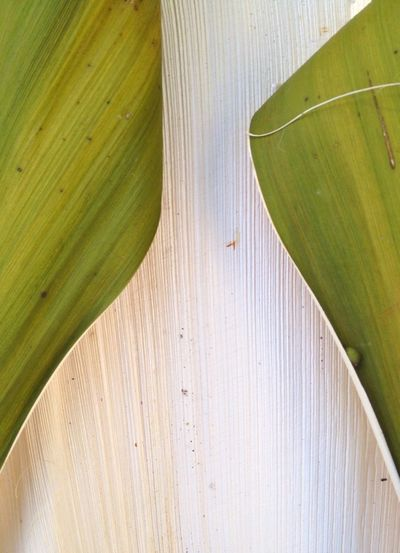 Close-up of wooden plant