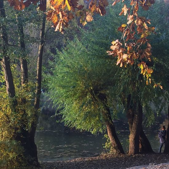 autumn at Krumme Lanke Autumn Berlin Krumme Lanke Tree Plant Growth Nature Beauty In Nature Water No People Tranquility Day Sunlight Leaf Tranquil Scene Plant Part Branch Green Color Land
