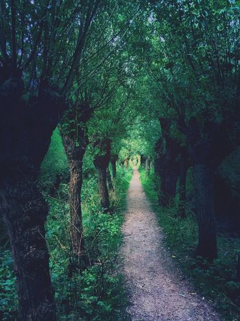 The Great Outdoors - 2016 EyeEm Awards The Way Forward Tree Diminishing Perspective Forest Vanishing Point Tranquility Dirt Road Nature Footpath Tree Trunk Tranquil Scene Narrow Pathway Green WoodLand Treelined Beauty In Nature Outdoors Walkway Long Day Plant Empty Idyllic