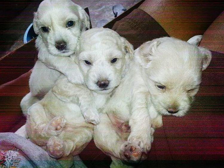 How time flies..throwback-monday hihi.. Pet Photography  Pet Dogloversofinstagram Doglover 💓💚💜💓,