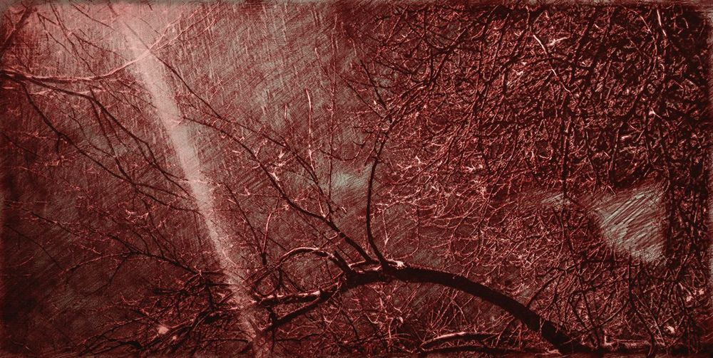 #branches #light #nopeople #edited #Nature  #EyeEmNewHere #landscape #nature #photography #bucharest #Winter Heavyedits #rain  Backgrounds Full Frame Red Tree Textured  Close-up