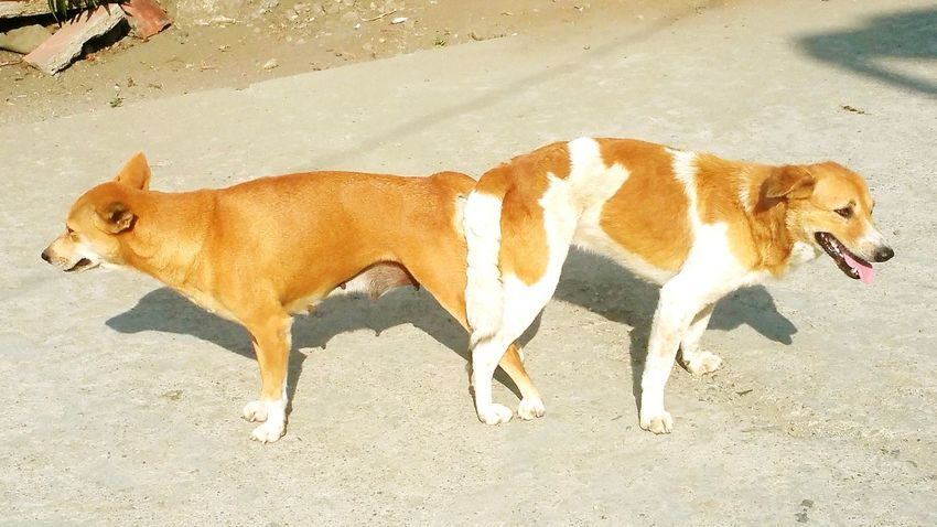 Dogslife Reproduction Multiply Dog