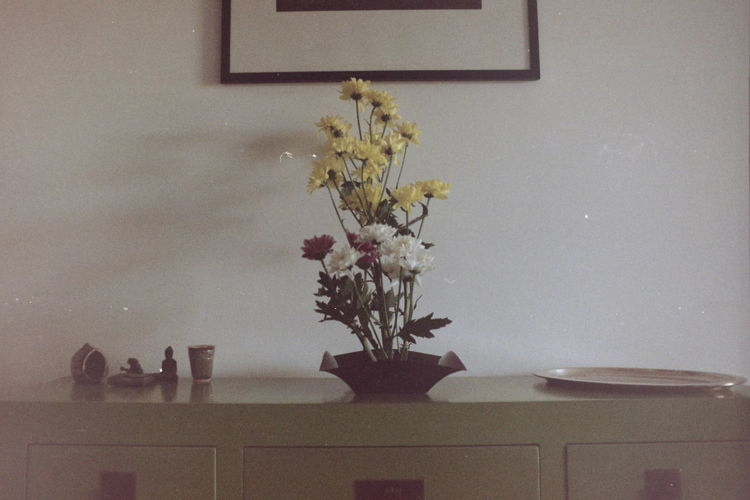 At Home Bouquet Chrysanthemum Film Photography Flower Flower Arrangement Flower Pot Fragility Fujifilm Home Interior Home Showcase Interior IKEBANA Indoors  Interior Decorating Interior Design My House No People Plant Potted Plant Table Tabletop Vase Yellow Yellow Flower 生け花
