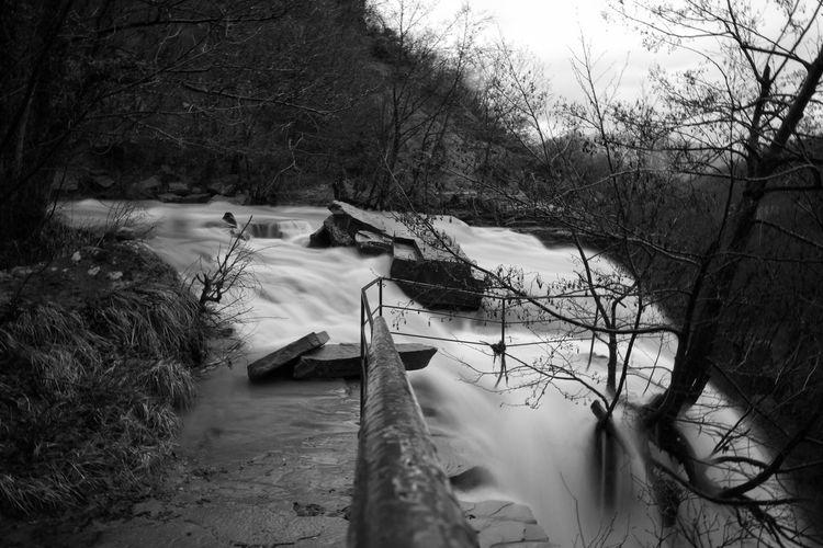 Goccia dopo goccia questo dolore ti consumerà, la tua corteccia marcirà, quelle braccia spoglie patiranno ancora la pelle d'oca, una cascata di problemi, che rendono la luce sempre più fioca... Soffocherai nel panico e cadrai in preda a qualcosa più grande di te, tormenterà il sonno e le tue giornate, confuso dai tutti quei perché, continuando a chieder se in questa vita uno scopo c'è... Tree Nature No People Water Tranquility Cold Waterfall Canon Mula B&w Blackandwhite