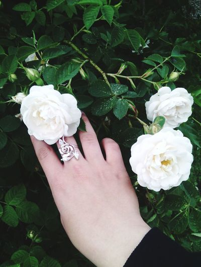Flowers Roses🌹 Roses Are Pink Hi! Relaxing I Like It <3 Hello World Happy Holiday My City Hello World ✌ Rings 💍 Ring