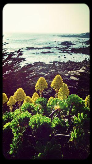 Las flores que miran el mar Beach Mar Chile