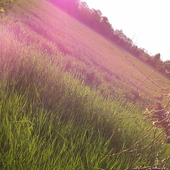 Pink Sunlight Field Grass Summer The Great Outdoors - 2017 EyeEm Awards