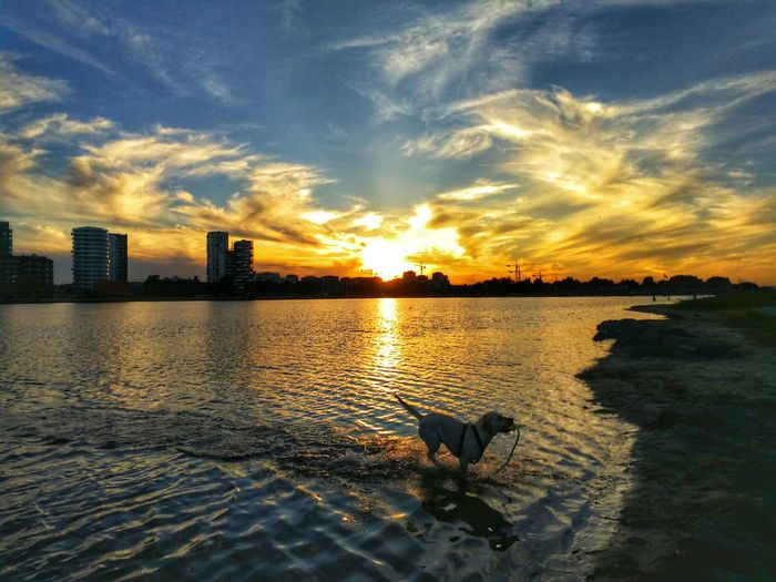 HUAWEI Photo Award: After Dark Buildings Sky Sunset Dog Dog Lover Dog Swimming Sea Calm Happy Water City Tree Sunset Swimming Reflection Sunlight Sky Architecture Cloud - Sky