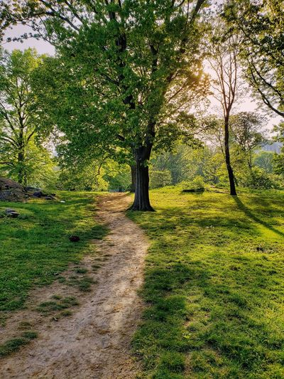 summer days Nature EUA USA Verde CFPRS Way Path Walm Walk Sun Summer Day Sky Central Park NY New York New York City NYC Tree Shadow Branch Field Sunlight Grass Sky Green Color Summer Road Tripping The Traveler - 2018 EyeEm Awards Stay Out