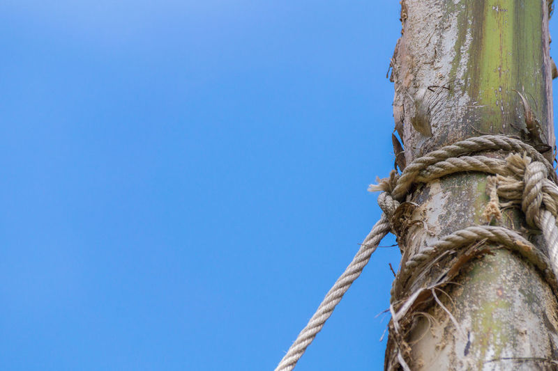 Low angle view of rope tied to bamboo against clear blue sky