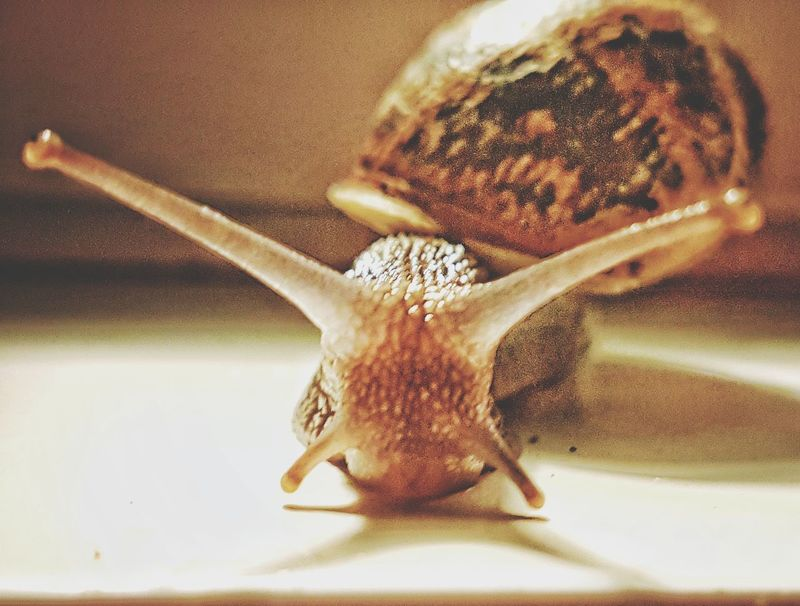 One Animal Insect Animal Themes Close-up Nature Snails Pace Snail Photography Snail No People