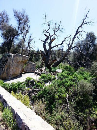 Cuyamaca Rancho State Park, California
