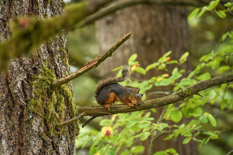 Tired Squirrel