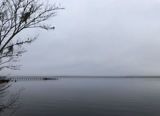 St. Johns River on an overcast morning. Water River St. Johns River Riverside Dock Tree Spanish Moss Overcast Gray Skies Gray Color Nature Tranquil Scene Sky No People Beauty In Nature Outdoors Scenics Waterfront Tranquility Day