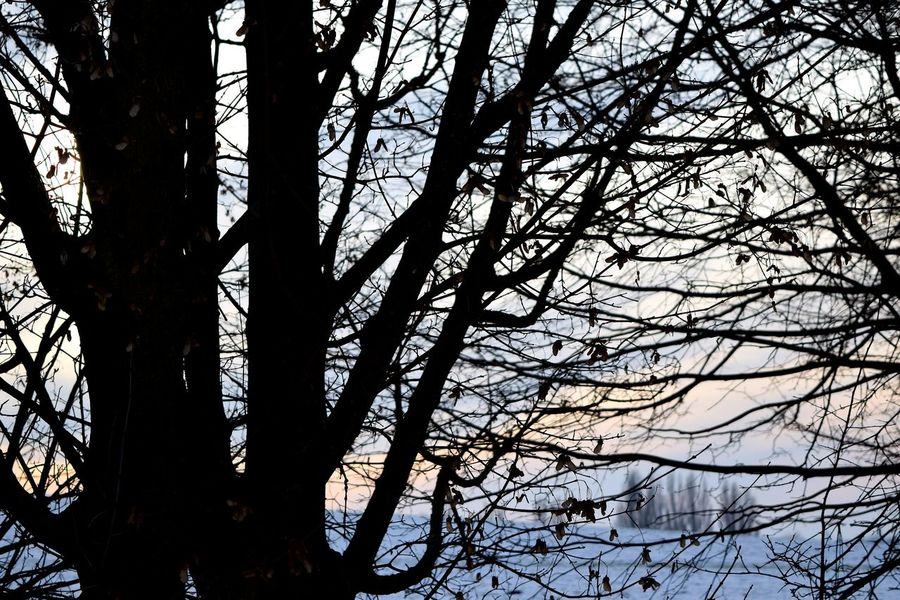 Tree Branch Nature Silhouette Beauty In Nature Outdoors Day How's The Weather Today? Cold Temperature Winter 2017 Bokeh January 2017 Beauty In Nature Fieldscape Nature Silhouette Winter Animal Themes Wartberg Snowing Travel Destinations