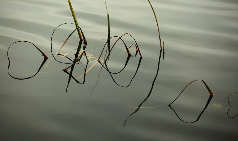 Reflections Reflections And Water Beauty In Nature Eyem Nature Lovers  Lost In The Landscape 3XSPUnity Taking Photos Close-up Nature Photography Nature Photograhy Nature Reflections In The Water Sillouettes Sillouettes And Shadows