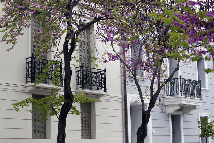 by Acropolis, Athens, Greece Architecture Athens Balcony Bloom Blooming Building Built Structure Exterior Full Frame Greece Horizontal Low Angle View Nature Neoclassical Neoclassical Architecture Purple Spring Thisio Trees Urban Wall Windows