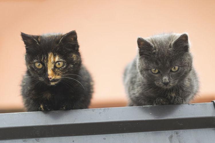 Portrait of cats kitten
