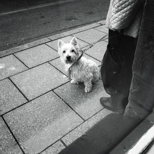 Low section of man with dog on sidewalk