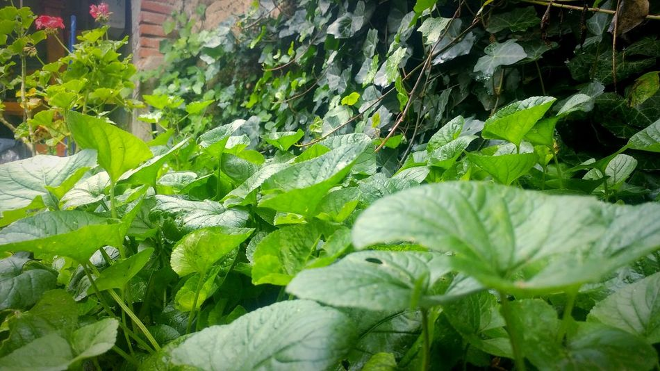 Violeta Plant Jardins Jardin Beauty In Nature Inspirations Nature Green Color Lluvia Nublado Dia