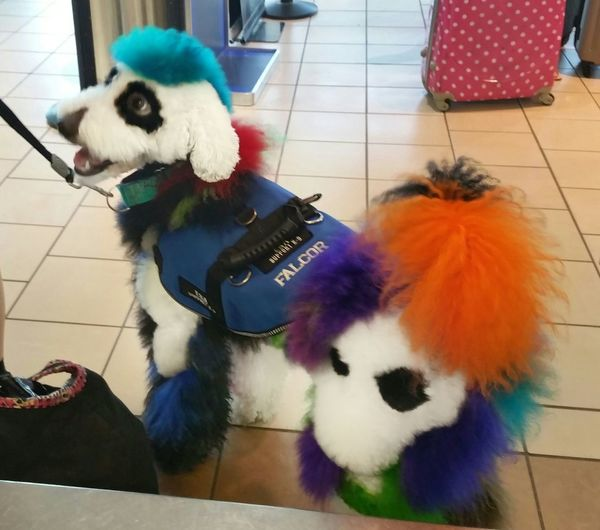 Colour Of Life Standard Poodle Rainbow Colors Painted Dog Tiedye Poodle Check This Out EyeEm Gallery Eyem Best Shots Dog Dyed Hair Cool Dog Sweetie