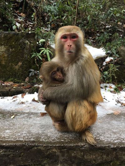 Monkey Animals In The Wild Animal Themes Two Animals Animal Wildlife Mammal Day