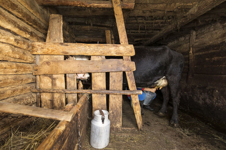 View of an animal standing in front of barn