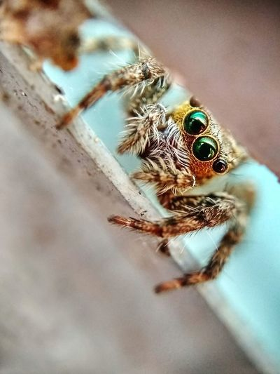 Spider eyes close up Spider Eye Spider Home Spider Macro Spider At Window Spider Collection Animal Themes Marco Photography Spider Photography Little Spiders Little Spider Hiding Spider Face Jumping Spider Spider Close-up Spider Web Animal Leg Animal Antenna