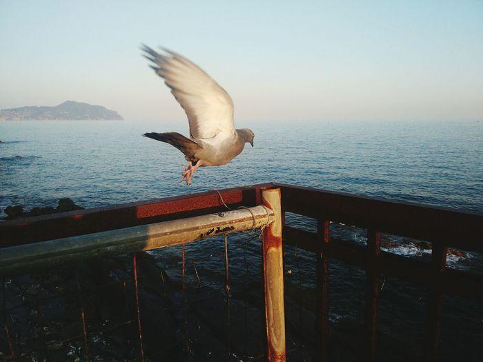 Moment Pigeon Bird  Volo Cogli L'Attimo