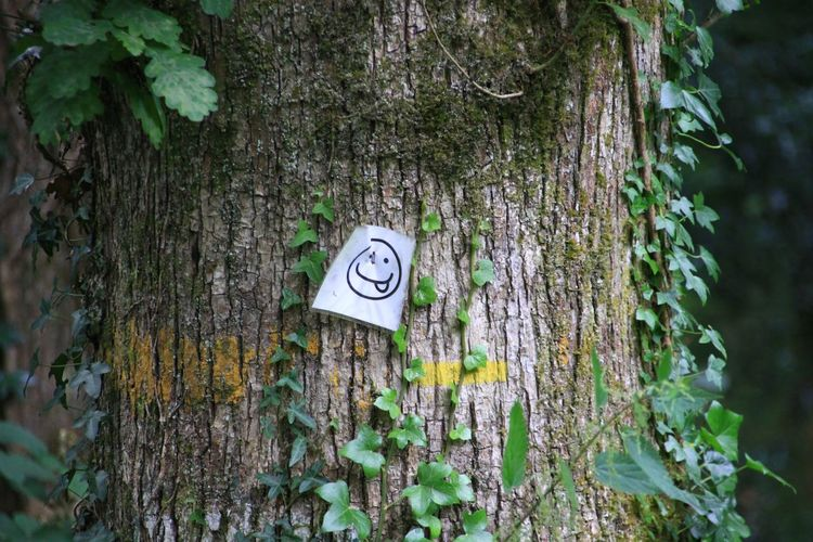 Paper With Smiley Face On Tree Trunk
