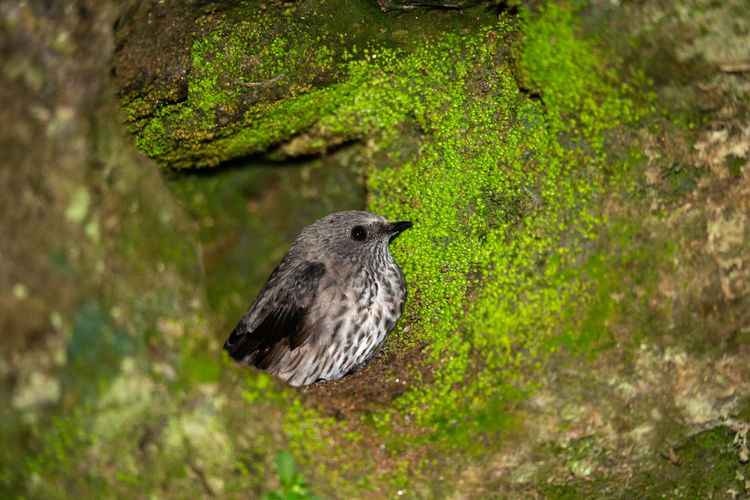Close-up of bird perching on a wood