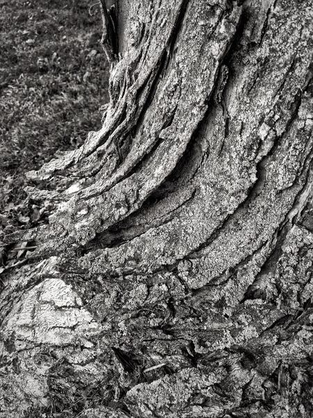 Tree Trunk Textured  Tree Rough Nature Day Bark No People Full Frame Outdoors Close-up Backgrounds