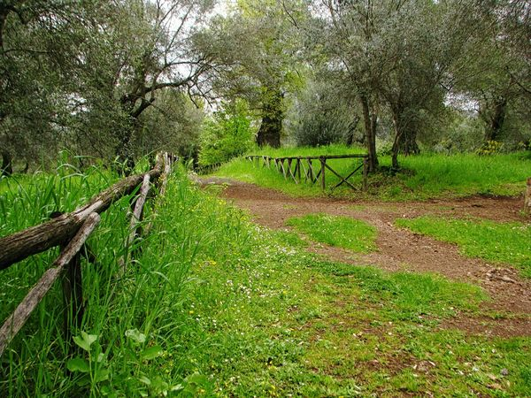 Italian countryside Mediterranean  Springtime Tourism Rural Scene Garden Tree Growth Grass Nature Green Color Outdoors Day Park - Man Made Space No People Beauty In Nature Field Europe ıtaly Lazio,Italy Tivoli Olive Tree Botanical Green Olive Grassland Agricultural Field Farmland