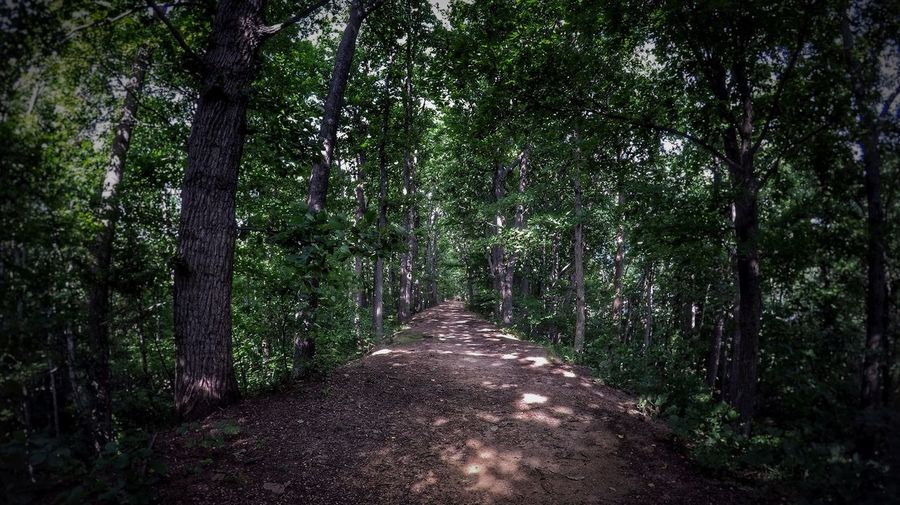EyeEmNewHere Tree Forest Nature Outdoors Gopro Landscape Beauty In Nature