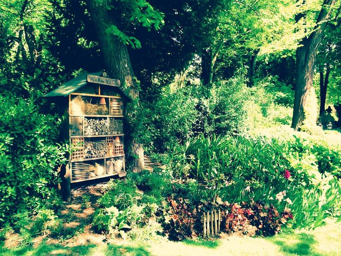 From My Point Of View Paris, France  Eyem Gallery Color Photography Check This Out Eye4photography  Hello World Biodiversity Biodiversité Jardin Du Luxembourg Park - Man Made Space Taking A Walk Greenery Grass Insect House Flowers, Nature And Beauty Garden Photography Architecture_collection Parisian Chic Maison à Insectes The Great Outdoors - 2016 EyeEm Awards Summer Vibes The Essence Of Summer Colour Of Life