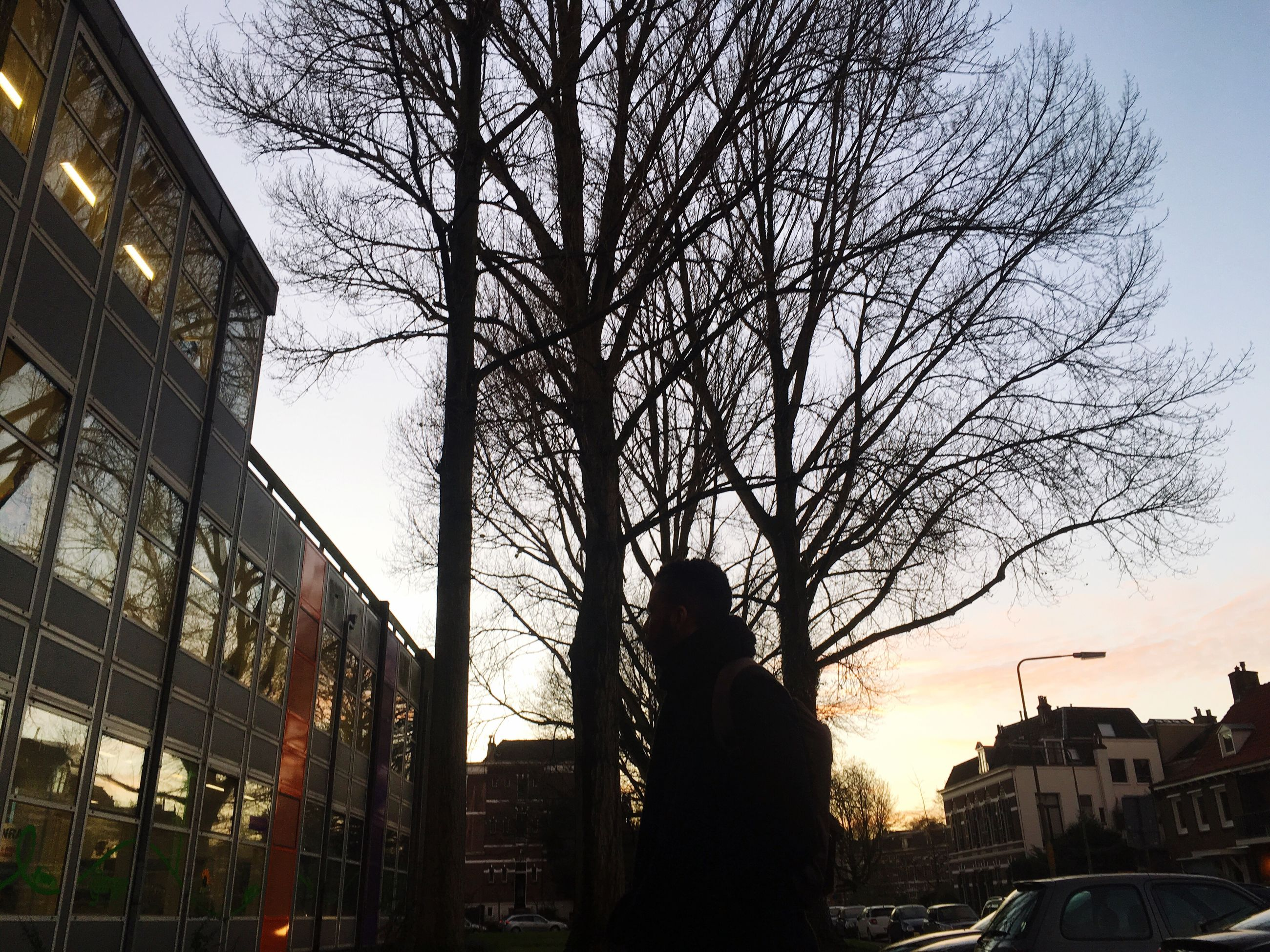 building exterior, bare tree, architecture, built structure, tree, silhouette, branch, city, sunset, sky, low angle view, residential building, building, residential structure, dusk, house, tree trunk, clear sky, outdoors, no people