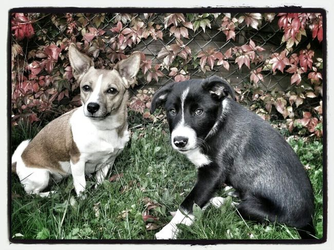 Boy and Girl Relaxing Dogs Animals Outdoor