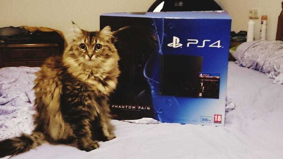 Hi! Spain♥ Cat♡ Suki Mascotas Gato😽 Hello World Ilovemycat Hello World Mainecoon Playstation4