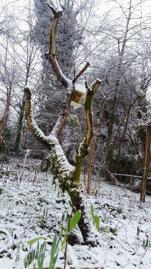 Tree_collection  Tree Treetastic Birdhouse In Snow Birdhouse Mossy Tree Moss Garden Photography Garden Lillies Sleeping Flowers Snow ❄ Snow Covered Wooden Pole Wooden Fence No People In The Garden Life Life Is Beautiful Life In Color Schumach Tree Ireland