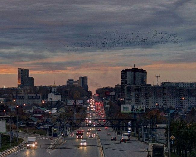 Это фотография стаи перелетных птиц над городом. Clouds And Sky Sunset Streetphotography Birds Night Lights