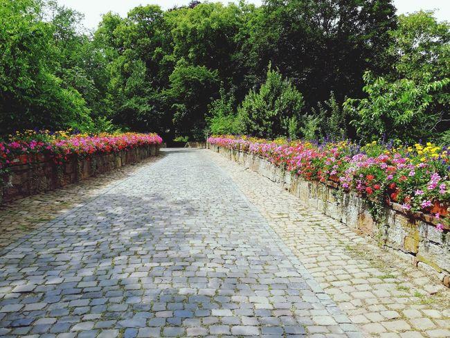 Weg zum Schloß Flower Tree Water Spraying Flowerbed Sky Plant Garden Path Domestic Garden Formal Garden Garden Stepping Stone Blooming Pathway Plant Life Botanical Park