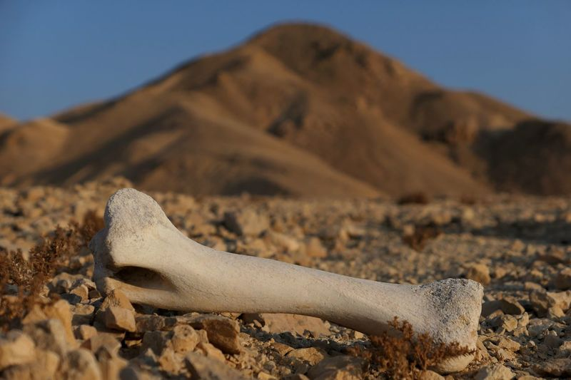 Global Warming Warming Dead Nature Land Sand Sunlight Desert Day Environment No People Mountain Scenics - Nature Outdoors Focus On Foreground Bone  Body Part Sky
