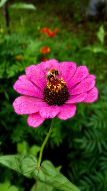 Flower Nature Ordu TURKEY Aniyakala Natural Wild Life Doğa Ordu Türkiye Nature Animal Dogal Vahşi Hayat çiçek Flowers Arı Bee
