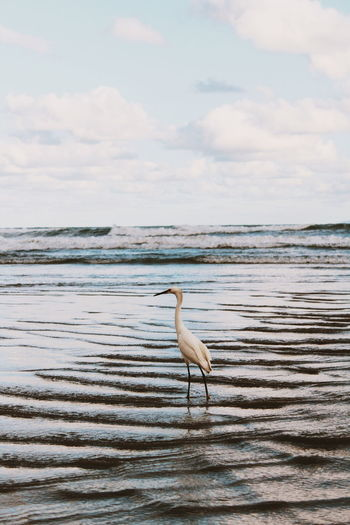 View of a coastal bird on beach