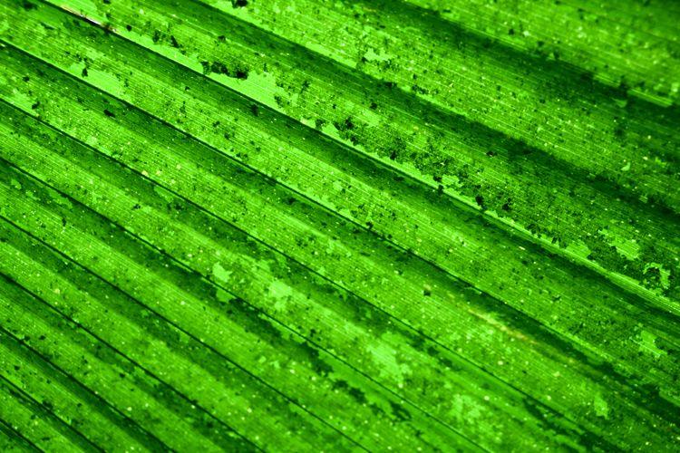 PALM LEAF Green
